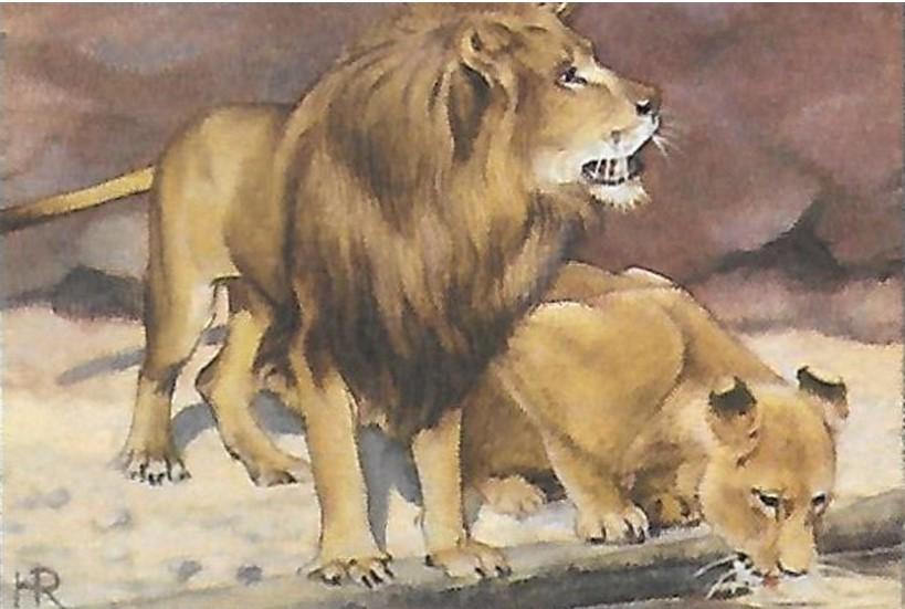 De leeuw. Deel 2 van dieren als helpers in Egyptische mythologie en Europese sprookjes.