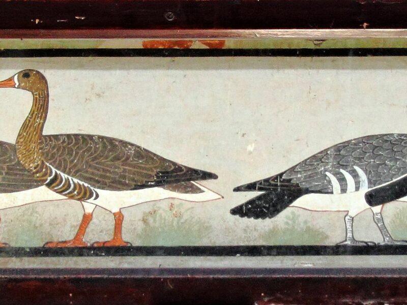 De gans. Deel 10 van dieren als helpers in Egyptische mythologie en Europese sprookjes.